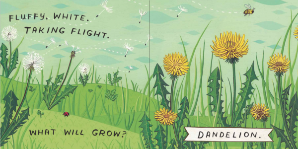 What Will Grow? dandelions illustrated by Susie Ghahremani